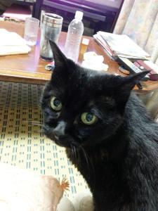 飼い猫〝クロ〟